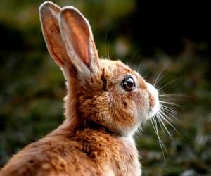 adorable, animal, and brown image