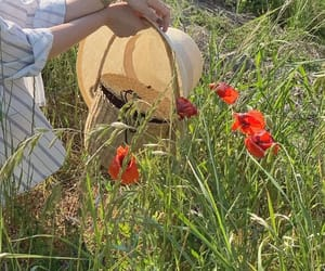 basket, meadow, and nature image
