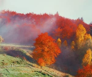 autumn, fall, and falling in love image