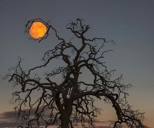 moon, tree, and autumn image