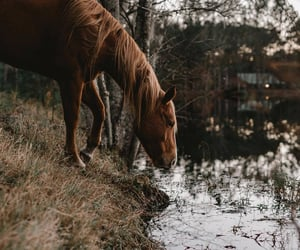 animals, autumn, and nature image