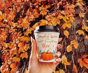 autumn, cider, and pumpkin spice image