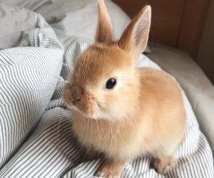 animals, bunny, and pets image