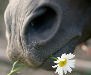 horse, animal, and flower image