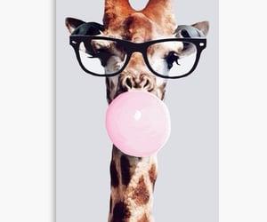 african animals, animals, and giraffe image