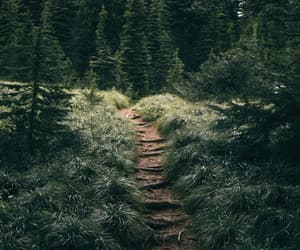 forest, green, and HIKING TRAIL image