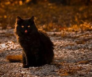 cat, autumn, and black cat image