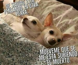 gracioso and perritos image