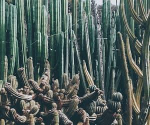 cactus, park, and las palmas image