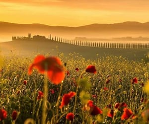 dreamy, italy, and meadow image