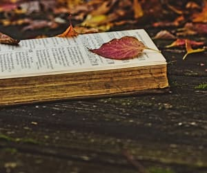 autumn, beautiful, and book image