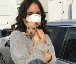 actress, beauty, and dog image