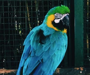 background, colours, and parrot image