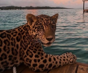 animal, sea, and jaguar image