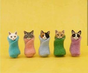 cats, creatividad, and diy image