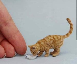 cat, diy, and gato image