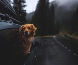 dog, animals, and photography image