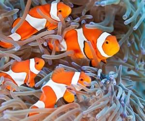 fish and nemo image
