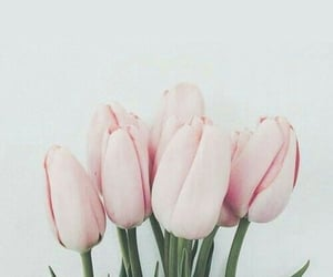 aesthetic, tulip, and flower image