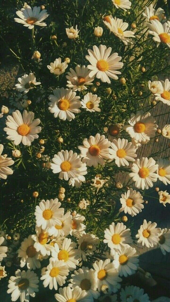 Aesthetic Flower Shared By Cordelia On We Heart It