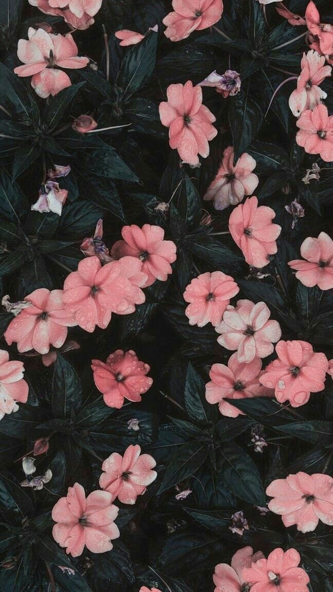 Aesthetic Flower Discovered By Cordelia On We Heart It
