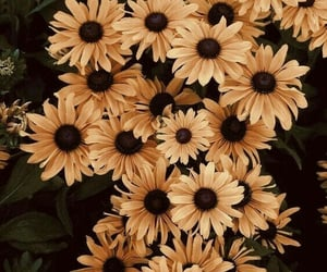 flowers, yellow, and wallpaper image
