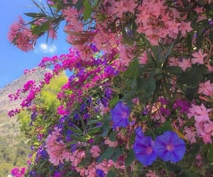 flowers, vibrant, and pink image