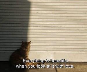 quotes, cat, and love image