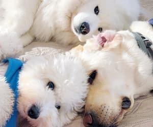 Animales, perros, and mascota image