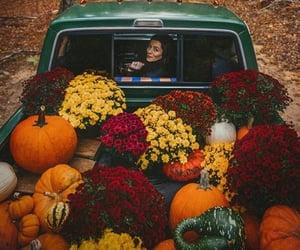 autumn, inspiracion, and flores image