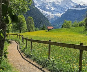green, nature, and travel image