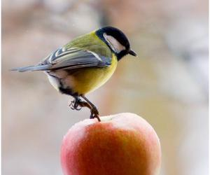 apple, bird, and colourful image