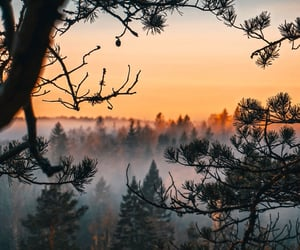 colorful, forest, and nature image