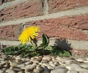 brick, weed, and yellow image
