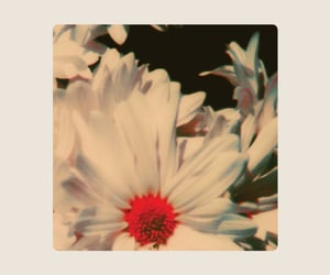 flowers, aesthetics, and vintage image