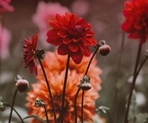 autumn, flowers, and roses image