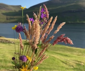 florals, flowers, and hills image