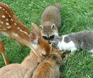 animals, grass, and raccoon image