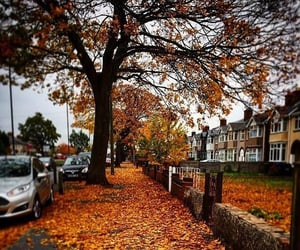 autumn, cold, and leaves image