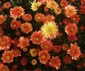 autumn, fall, and flower image