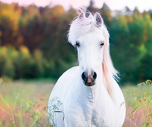 flowers, horse, and white image