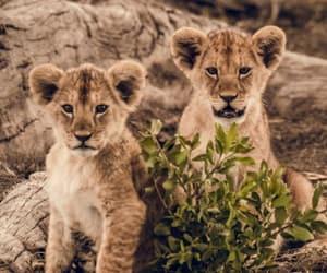 animals, nature, and savannah image