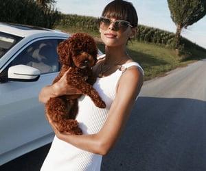 animals, dog, and fashion image