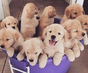 dog dogs, puppy puppies, and cute cuteness image
