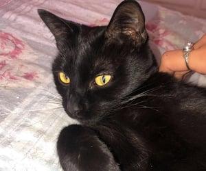 black, black cat, and black kitten image
