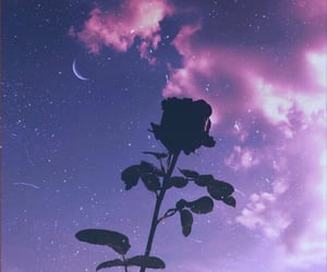 rose, stars, and aesthetic image