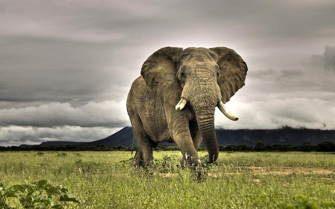 animal, big, and green image