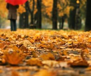 autumn, leaves, and umbrella image
