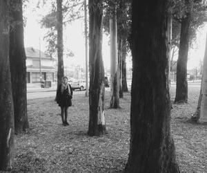 arboles, bosque, and domingo image