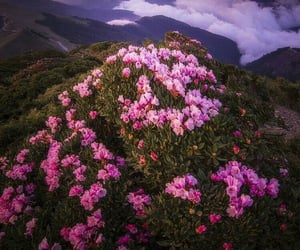 flowers, garden, and pink flowers image